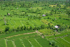 Ландшафт с полями риса Стоковые Изображения RF