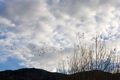 Ландшафт с птицами Стоковые Фотографии RF