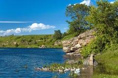 Ландшафт с рекой с зелеными берегами Стоковое Фото