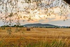 Ландшафт с связками на поле на заходе солнца Стоковые Изображения