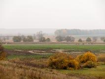 Ландшафт с табуном коров Стоковые Фотографии RF