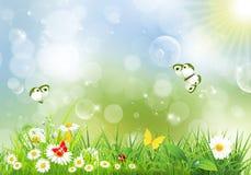 Ландшафт с цветками и бабочками Стоковые Фотографии RF