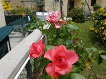 Ландшафт с цветками Стоковая Фотография