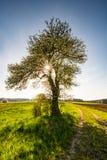 Ландшафт с цветя деревом Стоковая Фотография RF
