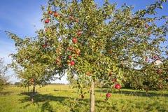Ландшафт с яблоней в осени Стоковые Изображения