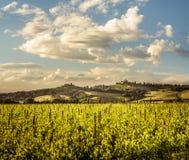 Ландшафт Тосканы в ` Orcia Val d между ` Angelo Scalo и Cinigiano Sant - 05/23/2016 стоковые фотографии rf