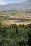 Ландшафт Тосканы с кипарисом стоковое изображение