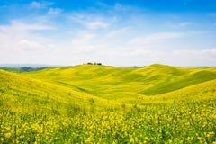 Ландшафт Тосканы с полем цветков в Val d Orcia, Италии стоковые изображения rf