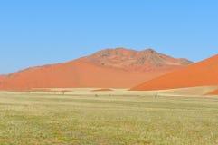 Ландшафт травы и дюны около Sossusvlei, Намибии Стоковое Изображение RF
