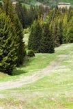 Ландшафт травянистой долины с тропой и строка зеленого ель-tr Стоковое Изображение RF