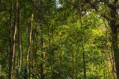 Ландшафт тропического леса в Таиланде Стоковое Изображение
