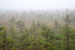 Ландшафт трясины с деревьями в болоте стоковые фотографии rf