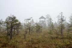 Ландшафт трясины с деревьями в болоте стоковое фото