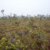 Ландшафт трясины с деревьями в болоте стоковое фото rf