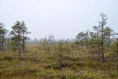 Ландшафт трясины с деревьями в болоте стоковая фотография rf