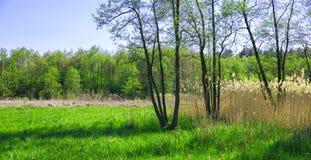 Ландшафт луга весны Стоковое фото RF
