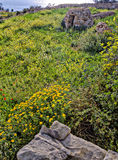 Ландшафт: луг при каменная хата на заднем плане принятая на Fawwara, Мальту Стоковые Фотографии RF