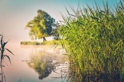 Ландшафт утра весны Стоковые Фото