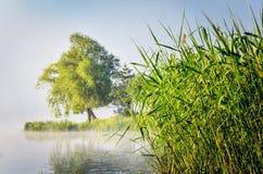 Ландшафт утра весны Стоковые Изображения RF