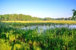 Ландшафт утра весны Стоковая Фотография