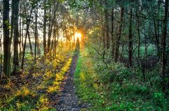Ландшафт утра лета Стоковые Фотографии RF