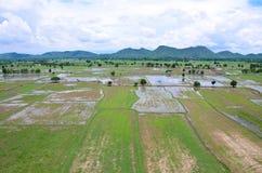 Ландшафт хранят рисом, который увиденный сверху; kanchanaburi Таиланд стоковое фото
