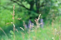 Ландшафт цветков стоковая фотография