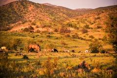 Ландшафт Чили стоковые изображения