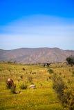 Ландшафт Чили стоковое изображение