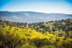 Ландшафт Чили стоковое фото rf