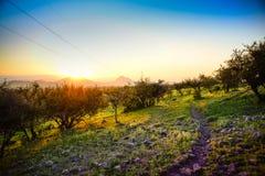 Ландшафт Чили стоковая фотография rf