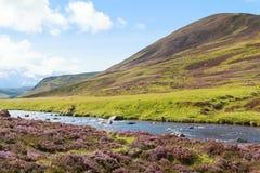 Ландшафт шотландской гористой местности сельский стоковое изображение