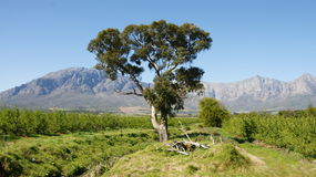Ландшафт Южная Африка Стоковое Изображение