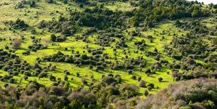 Ландшафт южного острова, Новой Зеландии Стоковое Изображение RF