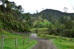 Ландшафт Beautiul долины Cocora, около к колониального городка Salento, в Колумбии Стоковое фото RF