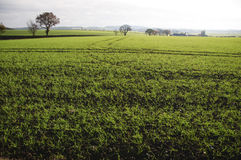 Ландшафт Bedfordshire Англия Великобритания Стоковые Фото