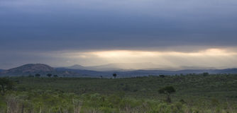Ландшафт, bushveld kruger, национальный парк Kruger, ЮЖНАЯ АФРИКА Стоковые Фотографии RF