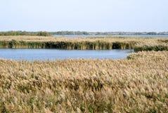 Ландшафт Camargue одичалый на осени стоковое фото
