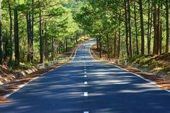 Ландшафт, Dalat, сосновый лес, перемещение, Вьетнам, улица Стоковая Фотография RF