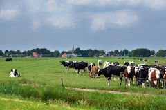 Ландшафт Friesian стоковое изображение rf