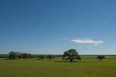 Ландшафт, La Pampa, Аргентина Стоковые Изображения