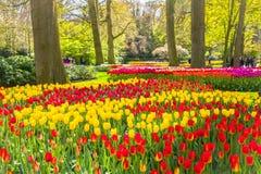 Ландшафт Lisse Голландия садов тюльпанов Keukemhof стоковое изображение rf