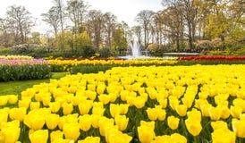 Ландшафт Lisse Голландия садов Keukemhof зацветая стоковые фото