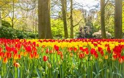 Ландшафт Lisse Голландия садов Keukemhof зацветая стоковые фотографии rf
