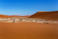 Ландшафт Sossusvlei красивый Death Valley Стоковые Изображения RF