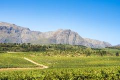 Ландшафт Stellenbosch Стоковая Фотография
