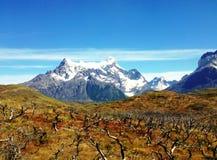 Ландшафт - Torres del Paine, Патагония, Чили Стоковые Изображения
