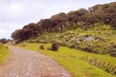Ландшафт VII San Luis potosi Стоковые Фото