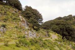 Ландшафт VIII San Luis potosi Стоковые Изображения