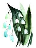 Ландыш акварели цветет картина впечатления Стоковое Изображение